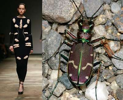 Insect-Inspired Fashion