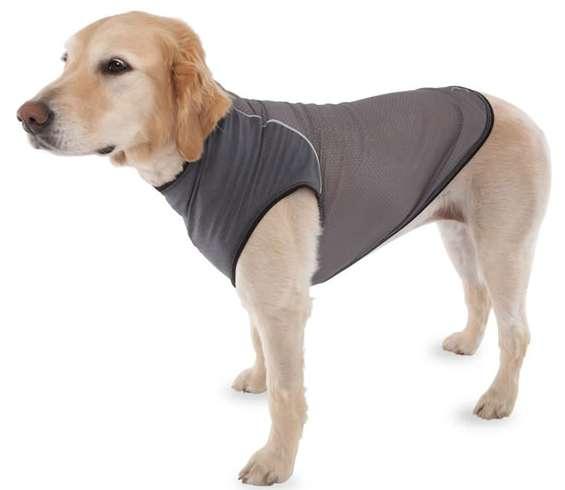 Pooch-Protecting Garments