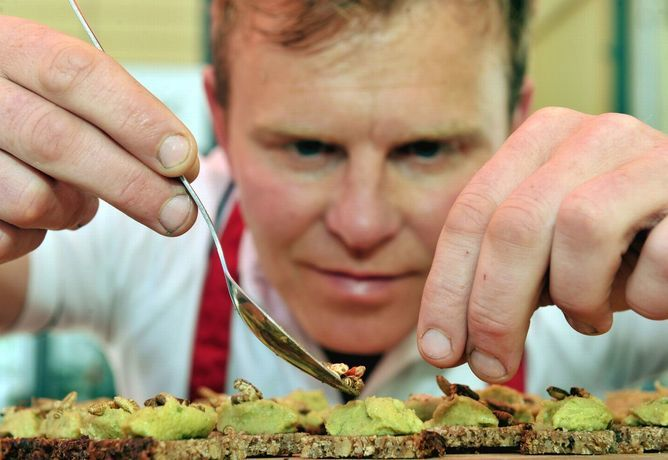 Gourmet Insect Restaurants