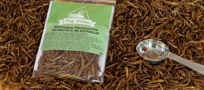 Barbecued Insect Snacks