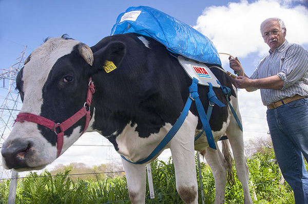 Fart-Capturing Cow Backpacks