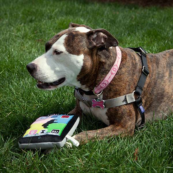 iPads for Dogs