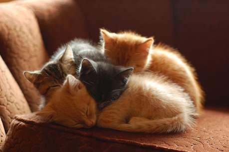 Adorable Feline Adoption Sites