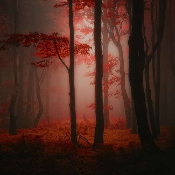 Effervescent Illuminated Forests
