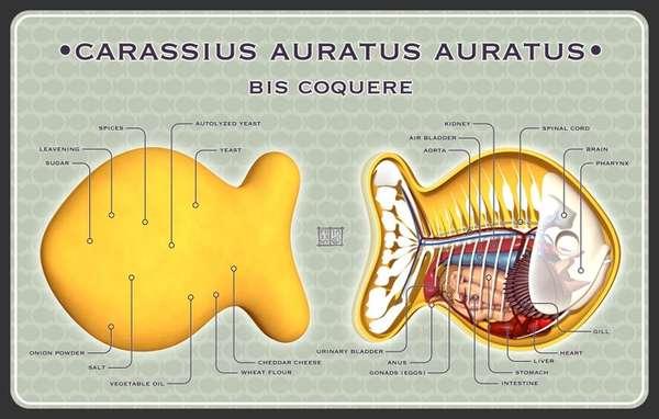 Edible Goldfish Anatomy