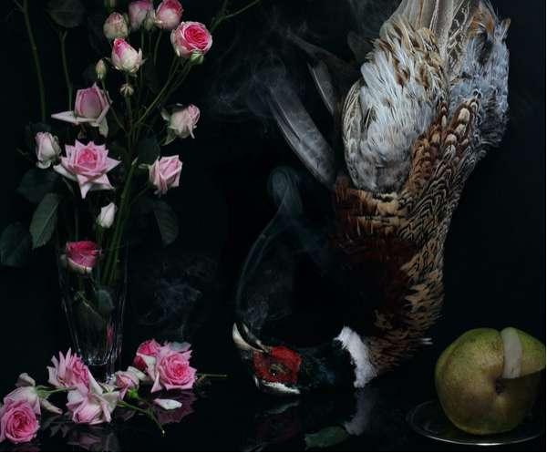 Deceased Avian Photography