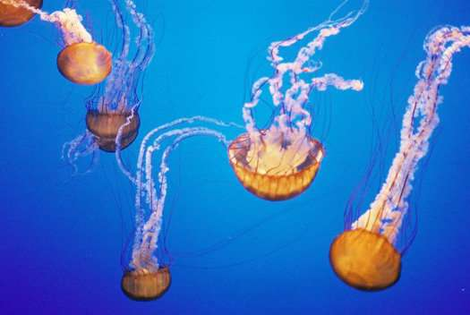Jellyfish Solar Cells