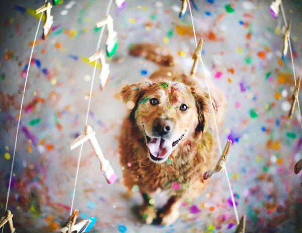 Adorable Canine Adoption Photography