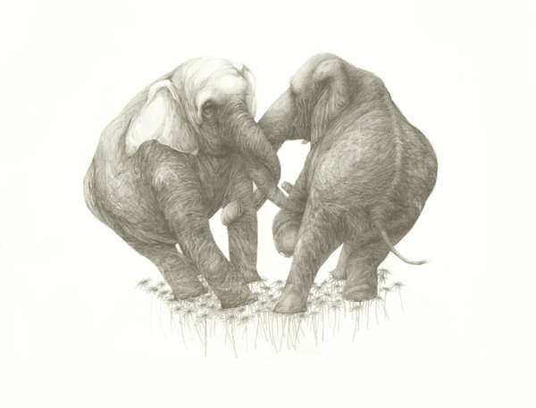 Romantic Elephant Renderings