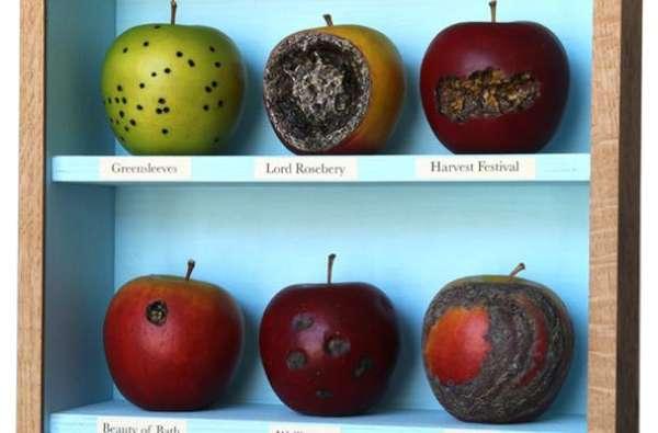 Festering Fruit Installations