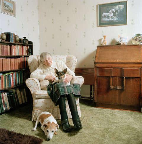 Canine Companion Portraits