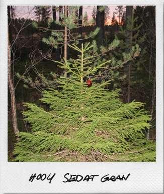 Order Christmas Trees Online