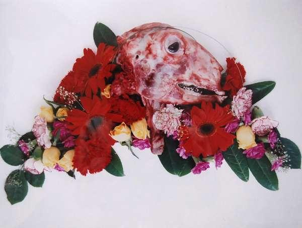 Creepy Carcass Photography
