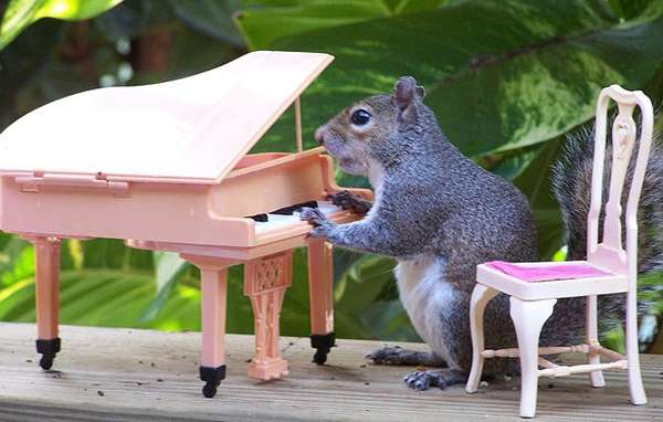Humanized Squirrel Captures