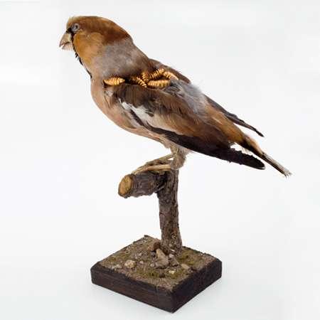Rotting Bird Art