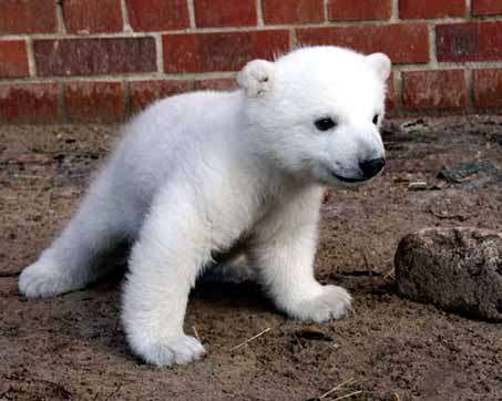 Kill Knut