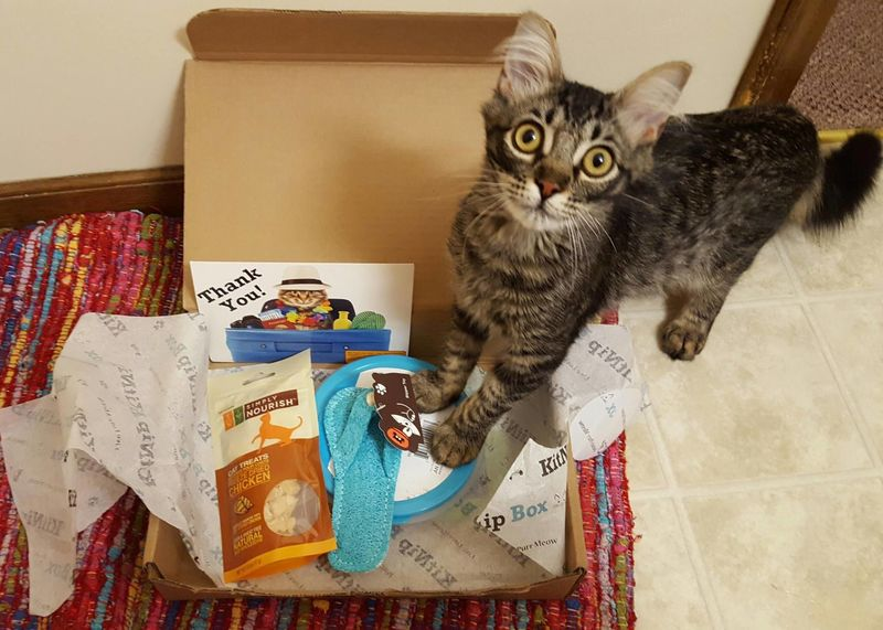 Cat Treat Subscription Boxes