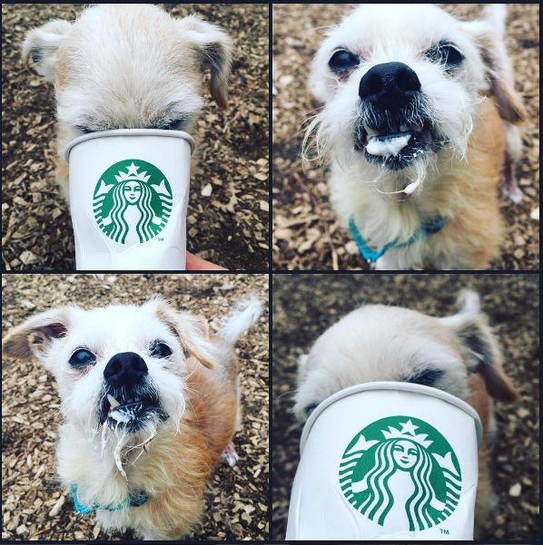 Coffee Shop Adoption Initiatives