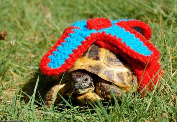 Knitted Turtle Cozies