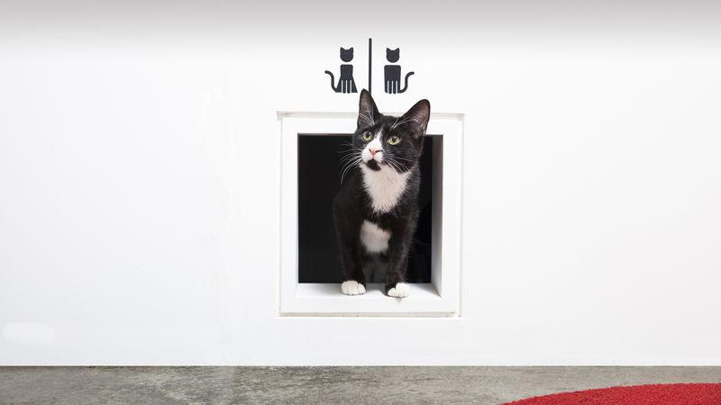 Cat-Rescuing Bars