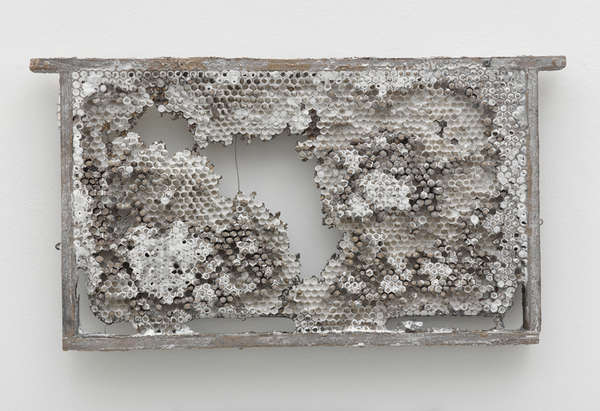 Naturalistic Honeycomb Castings