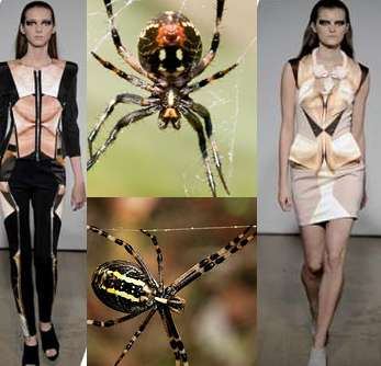 Spider Belly Fashion