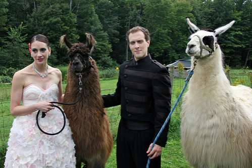 Laura and Simon's Llama Nuptials