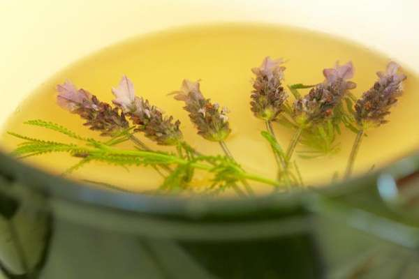 Lavender Soda Recipe