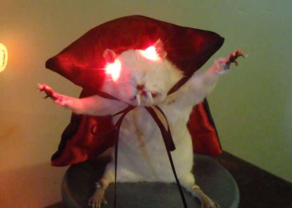 LED Taxidermy Vampire Rat