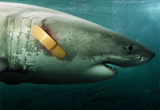 LeTone Bandages Shark