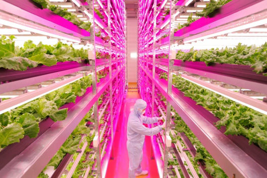 LED Lettuce Operations