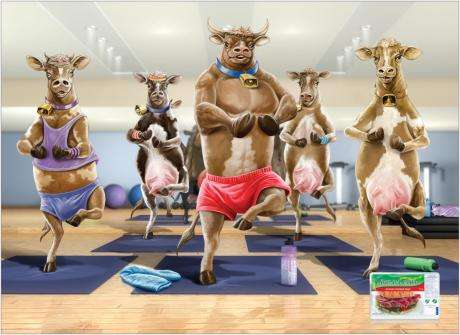 Cows Doing Yoga Before You Eat Them
