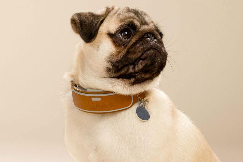 Dog-Tracking Collars