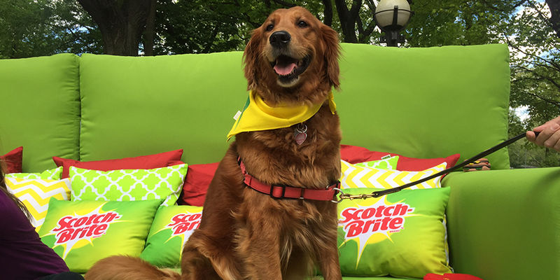 Promotional Pet Couches
