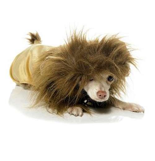 Lionizing Your Pets