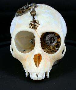lisa black vervet monkey skulls