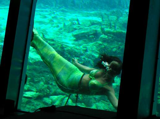 Live Mermaid Shows