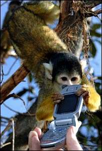 London Zoo Trying to Teach Monkeys to Stop Stealing Mobile Phones