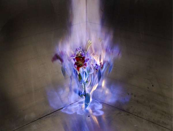 Flaming Flower Photography