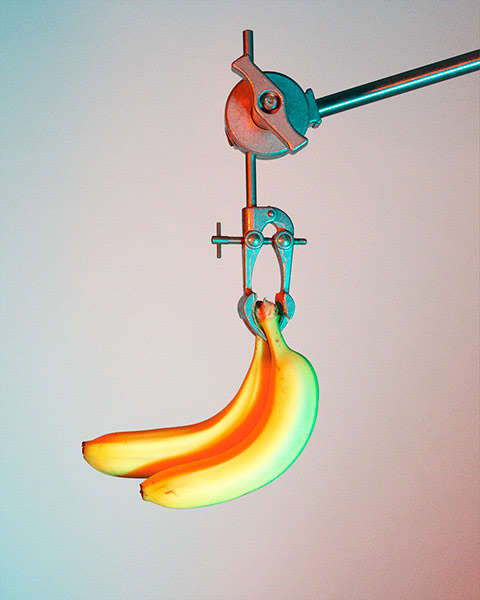 Suspended Fruit Photography