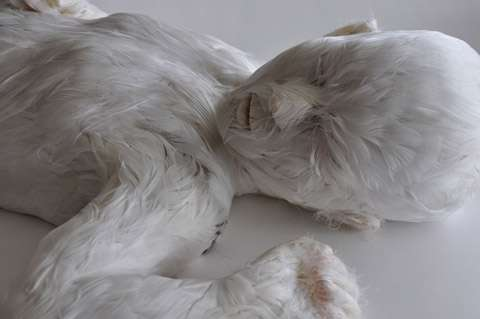 Feather-Covered Human Sculptures