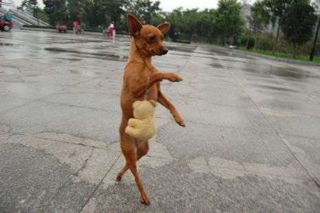 Strutting Diva Dogs