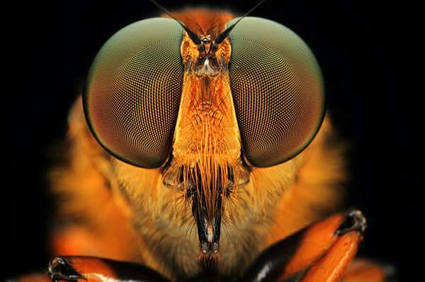 Freaky Fly Close-Ups