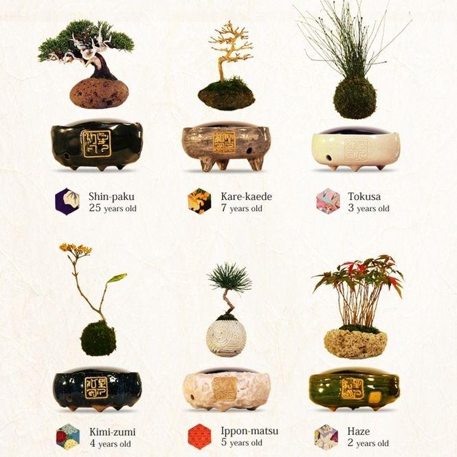 Levitating bonsai plants magnetic energy for Levitating plant