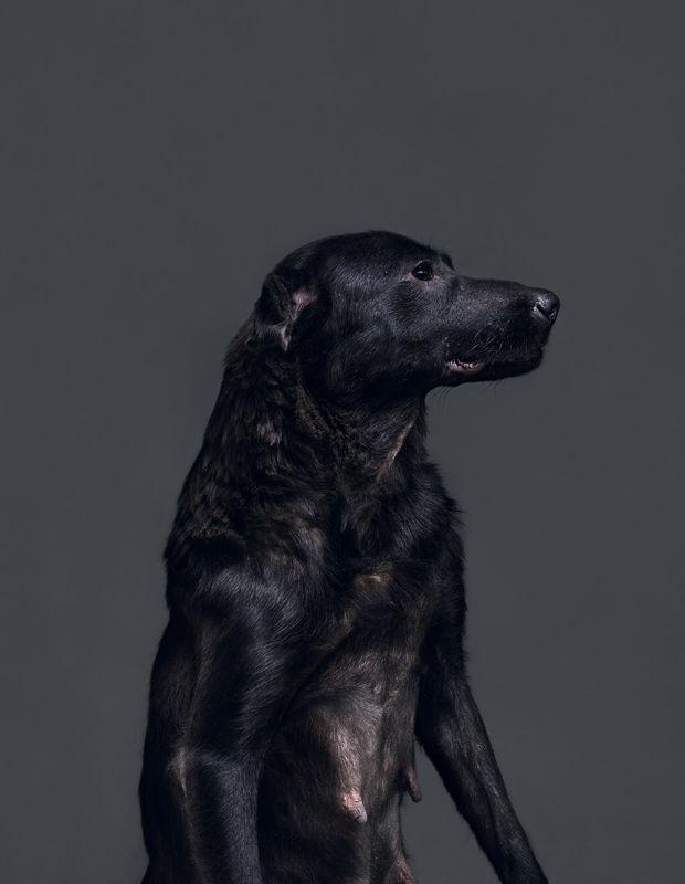 Euthanised Dog Photography