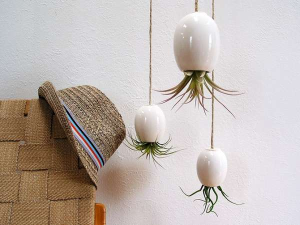 Hanging Air Plant Pods by Michael McDowell