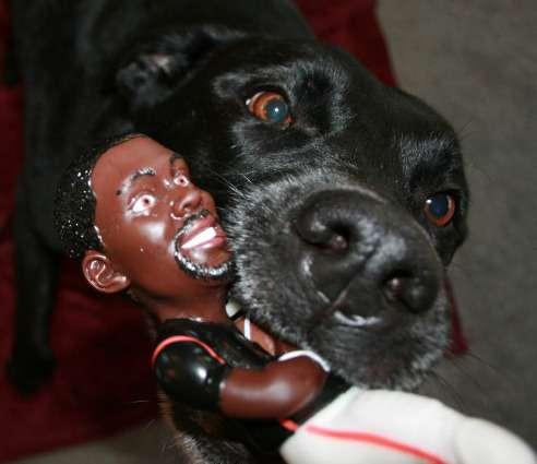 michael vic dog toy