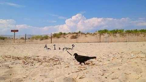 Pigeon Contemplation Captures