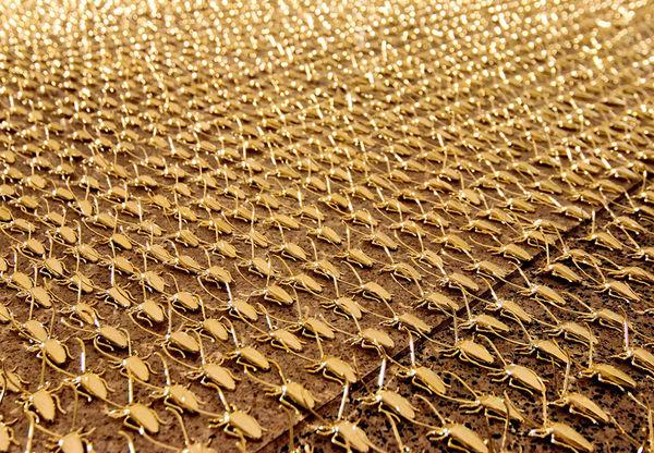 Golden Roach Guerrilla Art