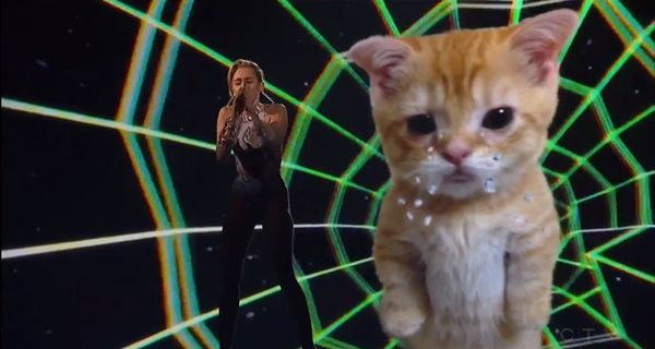 Psychedelic Feline Celebrity Performances